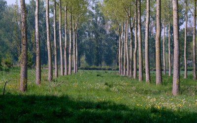 Erdőtelepítések tervezése